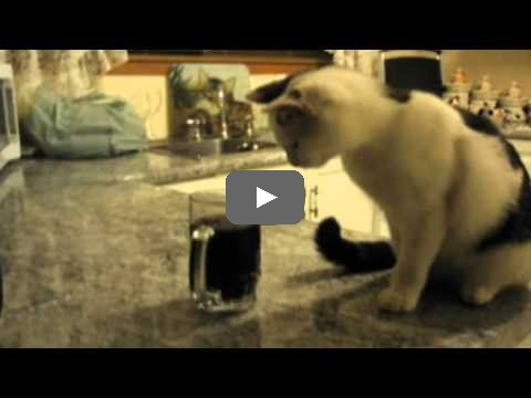 cat whines a lot