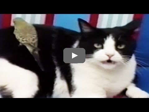 Cats Compilation Funny Videos 2015 Funny Cat Videos Funny Cats Compilation Funny Animals Compilation 2015 Give Cats Better Life Funny Videos 2015 Funny Cat Videos Funny Cats Compilation Funny